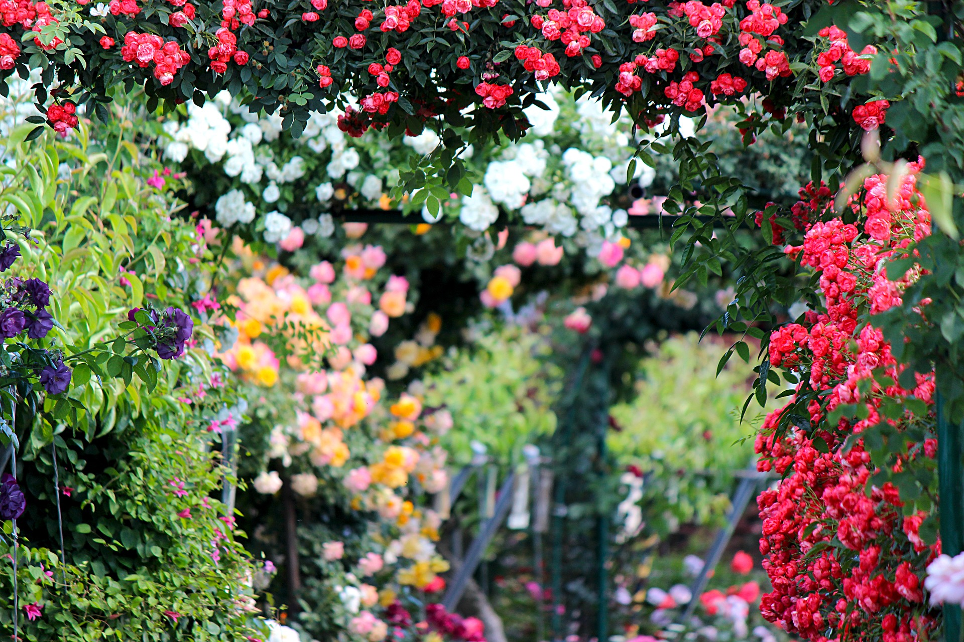 Gardening Services in Plymouth